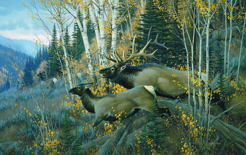 north american animals  u2013 chisholm valley wildlife art