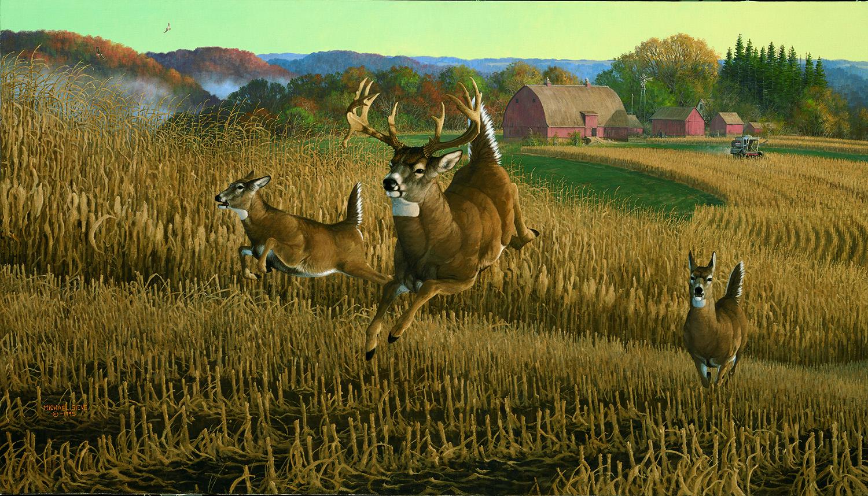 Chisholm Deer – Valley Whitetail Wildlife Art