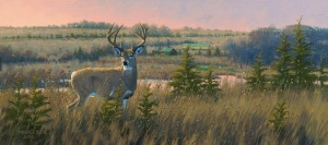 Kansas-Whitetail Deer